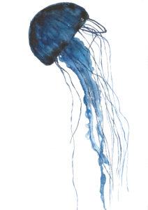 aquarelle dessiner méduse