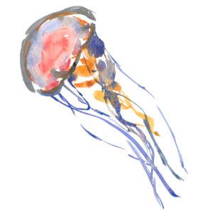 medusetopchrono