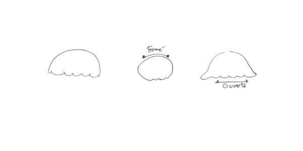 dessiner une méduse